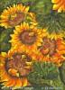 Blumen, Wärme, Sonnenblumen, Grafik