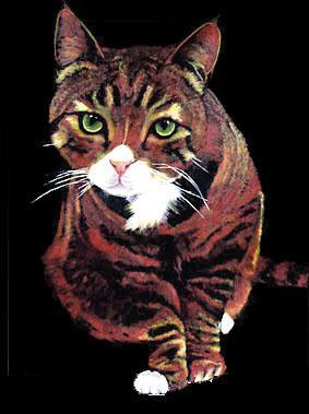 Portrait, Acrylmalerei, Katze, Zeichnung, Figur, Tiere