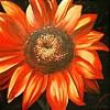Gelb, Sonne, Blumen, Rot schwarz