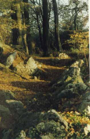 Felsenmeer, Hemer, Fotografie, Sauerland, Herbst