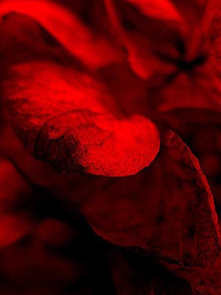 Scharf, Rot, Fotografie, Kunstfotografie, Natur, Modern