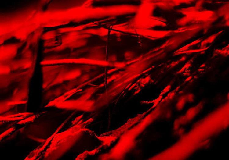 Netz, Kunstfotografie, Schubertj73, Kunstwerk, Fotografie, Makro