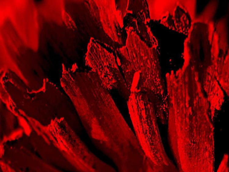 Unscharf, Makro, Abstrakt, Blumen, Fotografie, Monochrom