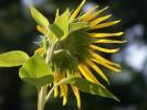 Fotografie, Pflanzen
