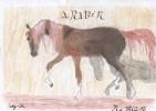 Zeichnung, Hengst, Pferde, Araber