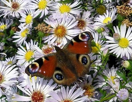 Fotografie, Blumen, Natur, Landschaft, Schmetterling