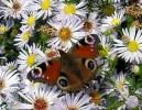 Fotografie, Blumen, Natur, Landschaft