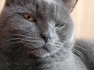 Tiere, Katze, Schau, Augen