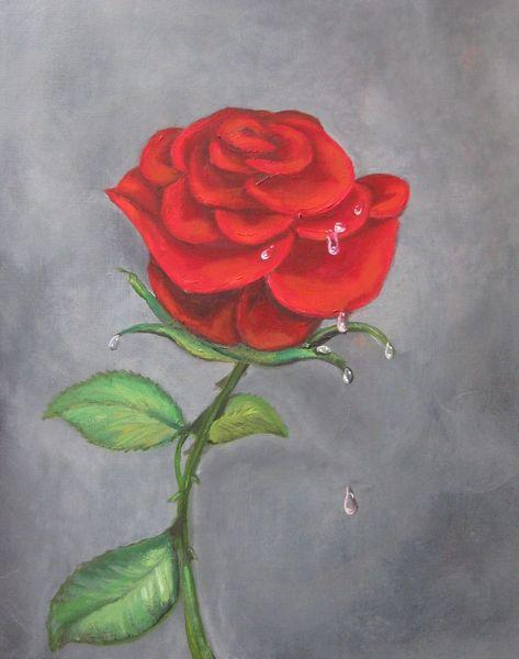 Blüte, Blumen, Rose, Wasser, Tropfen, Tau