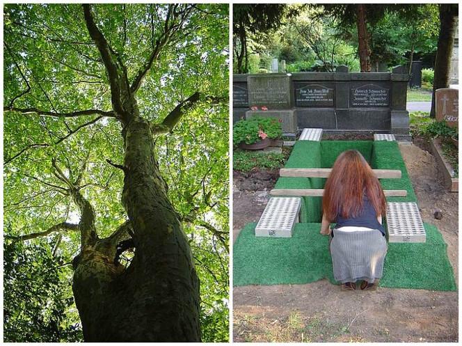 Fotografie, Baum, Abschied, Friedhof, Melaten, Trauer