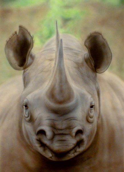 Airbrush, Freihand, Tiere, Portrait, Nashorn, Malerei