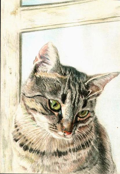 Buntstiftzeichnung, Zeichnung, Katzenportrait, Zeichenkarton, Portrait, Zeichnungen