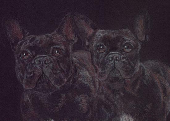 Bulldogge, Portrait, Frz, Buntstiftzeichnung, Schwarz, Zeichnung