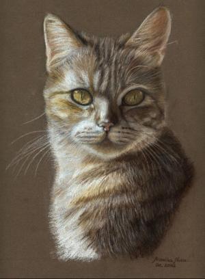Zeichnung, Portrait, Zeichnungen, Katze