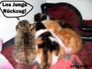 Katze, Rückzug, Flucht, Pinnwand