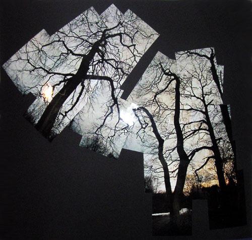 Winter, Konzept, Perspektive, Krumm, Baum, Timp