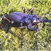 Hirschkäfer - käfer insekt stahl schmiedearbeit skulptur