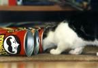 Neugier, Katze, Pinnwand
