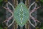 Natur, Blätter, Digital, Grün