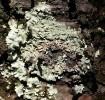 Wald, Flechte, Fotografie, Baum