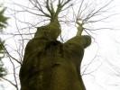 Fotografie, Baum akt, Akt, Baum