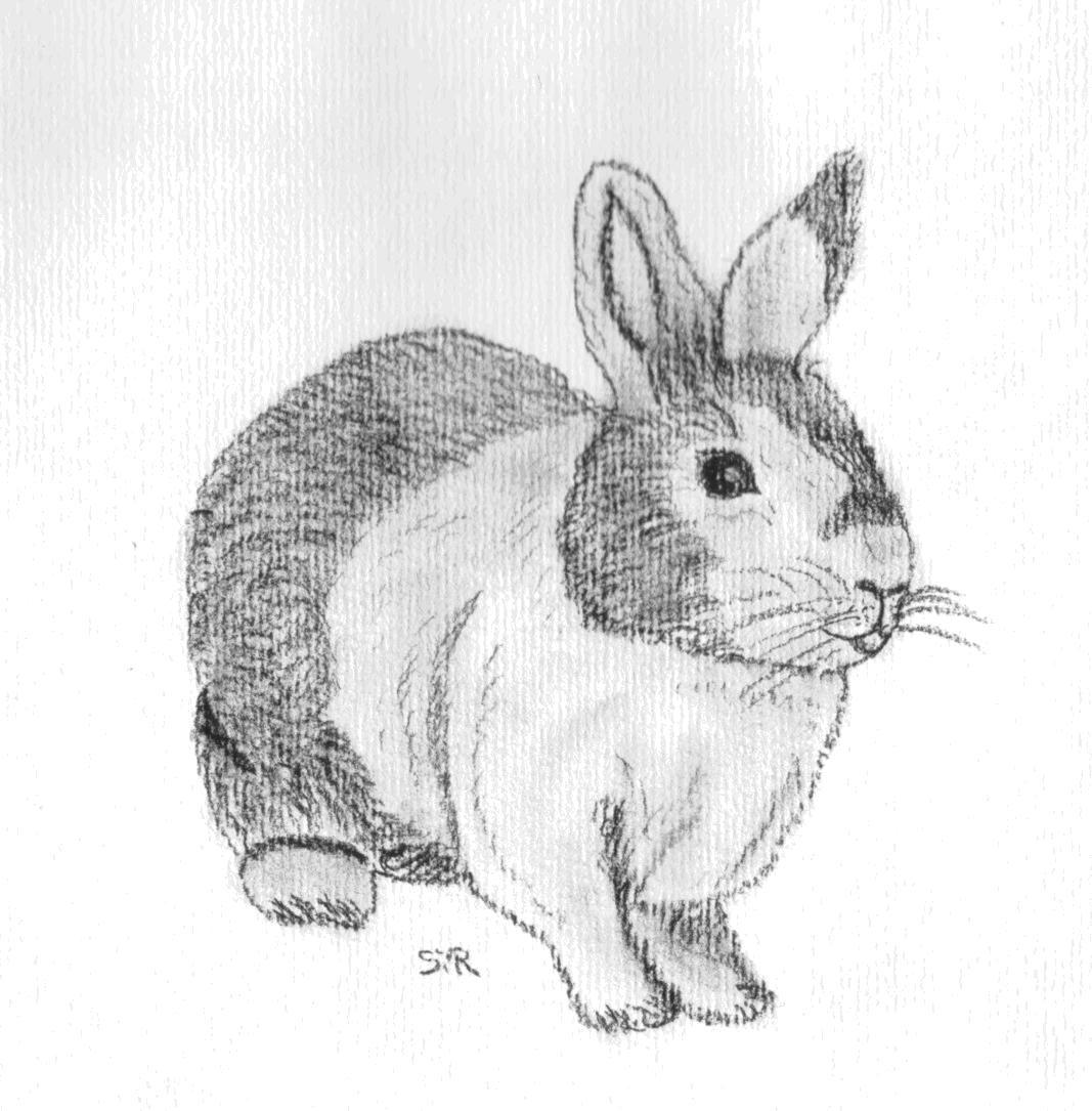 Kunstnet werke zeichnungen tiere kaninchenportrait