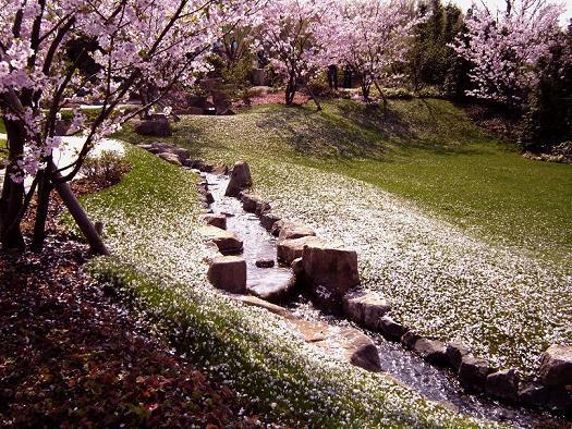 Japanisch, Fotografie, Kirschblüte, Landschaft