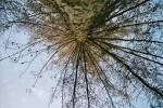 Äste, Frosch, Landschaft, Baum