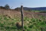 Fotografie, Landschaft, Kuh
