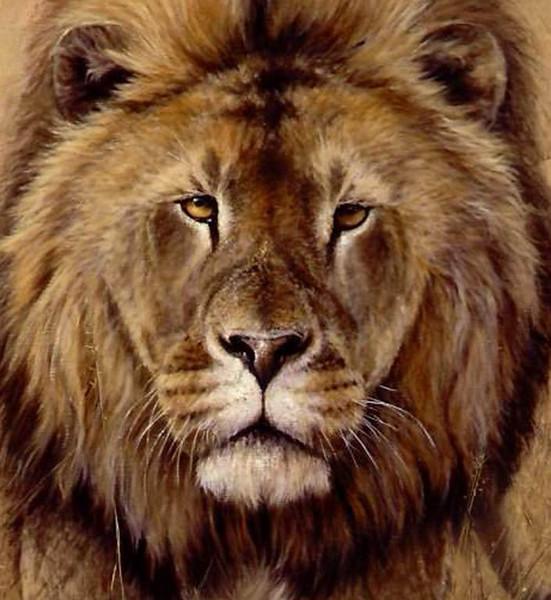 Tierportrait, Tiere, Löwenkopf, Löwe, Malerei, Ausschnitt