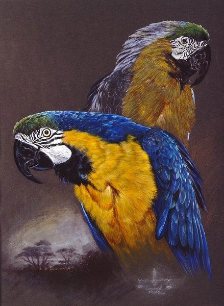 Gelbbrustara, Vogel, Malerei