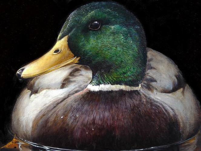 Stockente, Ente, Vogel, Malerei