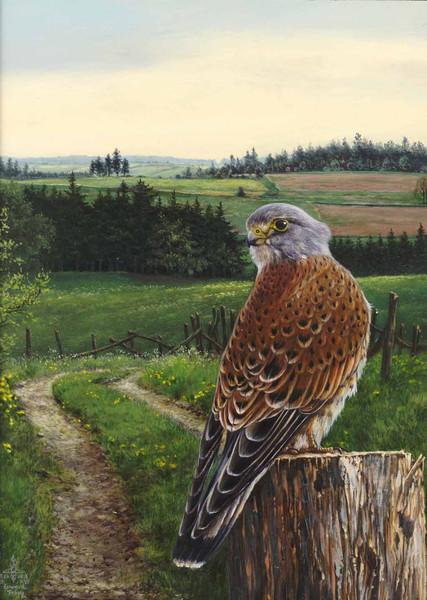 Turmfalke, Falke, Vogel, Malerei