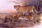 Gepard, Katze, Malerei