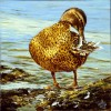 Vogel, Stockente, Ente, Malerei
