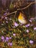 Vogel, Rotkehlchen, Malerei, Immergrün