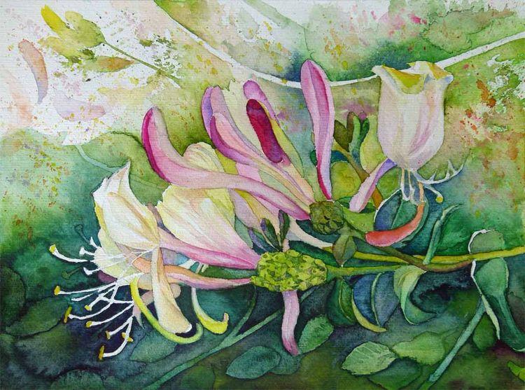 Blüte, Geißblatt, Jelängerjelieber, Blumen, Aquarellmalerei, Aquarell