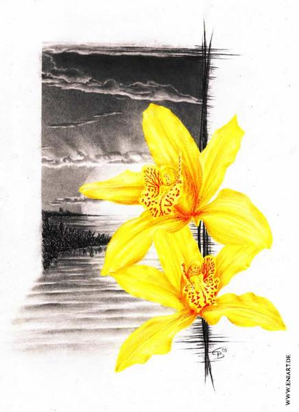 Stillleben, Zeichnung, Zeichnungen, Stille