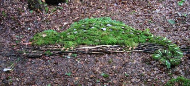Wald, Moos, Schule, Tiere, Pinnwand