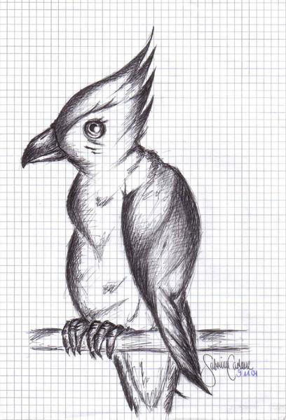 Skizze, Zeichnung, Papagei, Zeichnungen