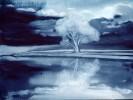Kühl, Baum, Landschaft, See