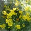 Glasblumen, Glasscheibe, Treibhaus, Blumen
