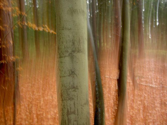 Verwischen, Baum, Wischeffekt, Lichtmalerei, Lightpainting, Wald
