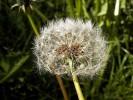Fotografie, Pflanzen,