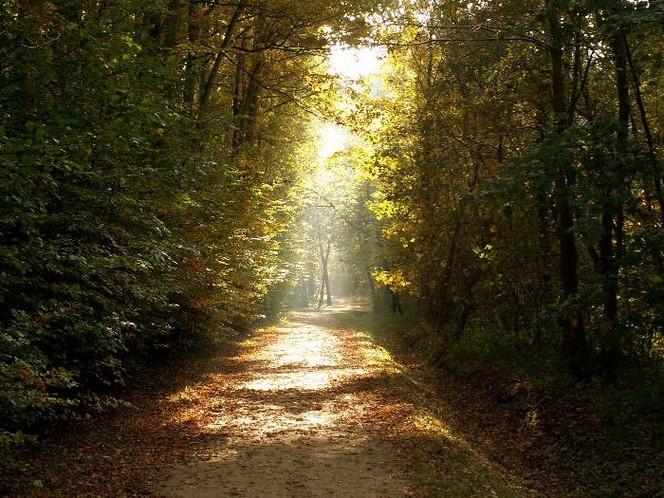 Fotografie, Landschaft, Licht, Weg