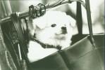 Zusammenleben, Reportage, Tiere, Hund