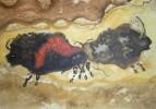 Steinzeit, Bison, Wisent, Malerei