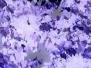 Abstrakt, Fotografie, Blätter