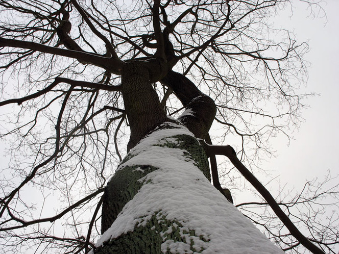 Schnee, Landschaft, Winter, Fotografie, Baum, Himmel