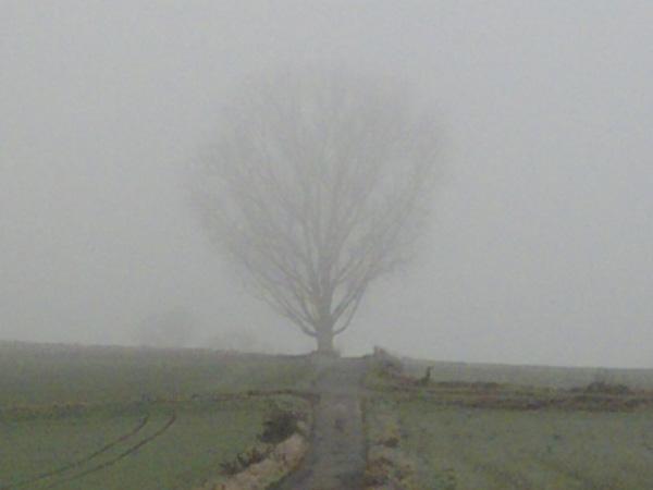 Baum, Landschaft, Fotografie, Nebel, Wolken